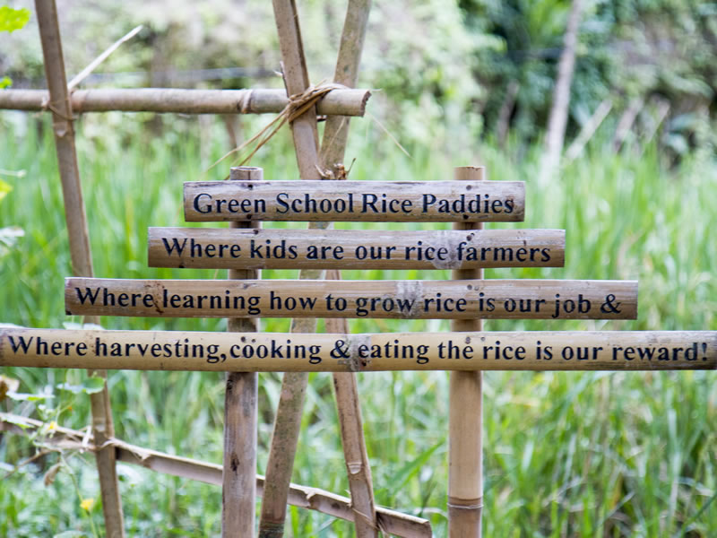 Green School 1.2jpg_r1_c1