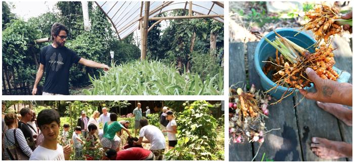 Permaculture design course bali, permaculture bali, agrotourism bali, internships bali, organic bali, permaculture Indonesia, permaculture design course Indonesia, Green School Bali