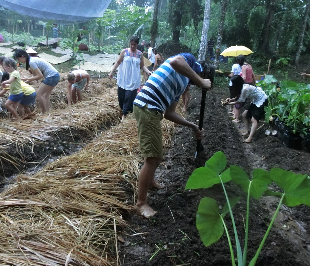 Permaculture Bali Gardening