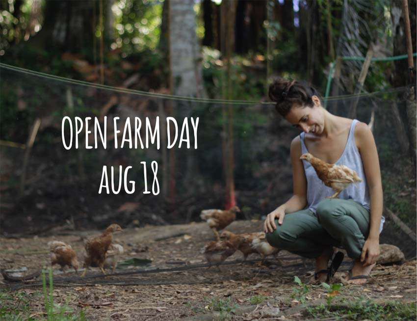 Bali farm organic permaculture