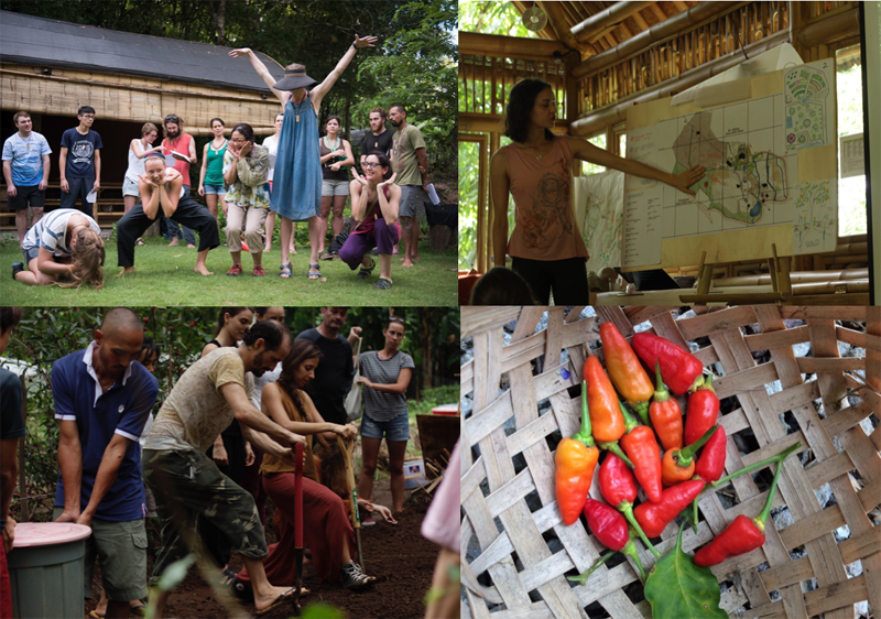 Intro to Permaculture Bali 1