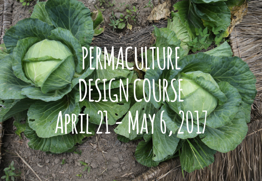 Permaculture Design Course Bali with Chris Shanks