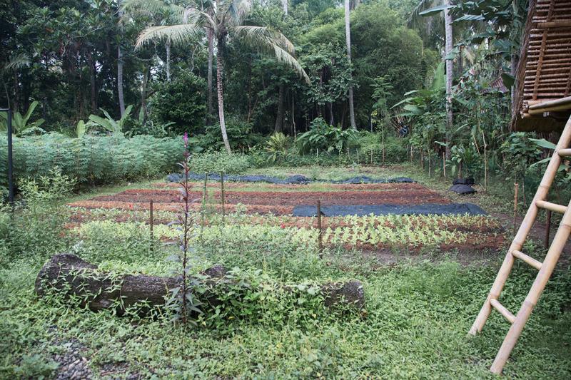 permaculturefarmbalitour