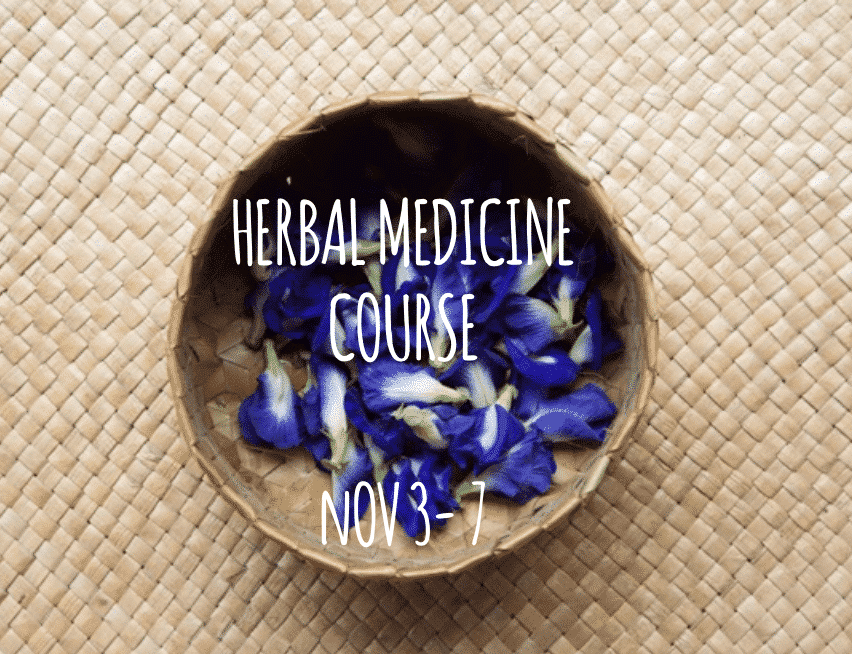 Herbal Medicine Course Bali with Penny Livingston