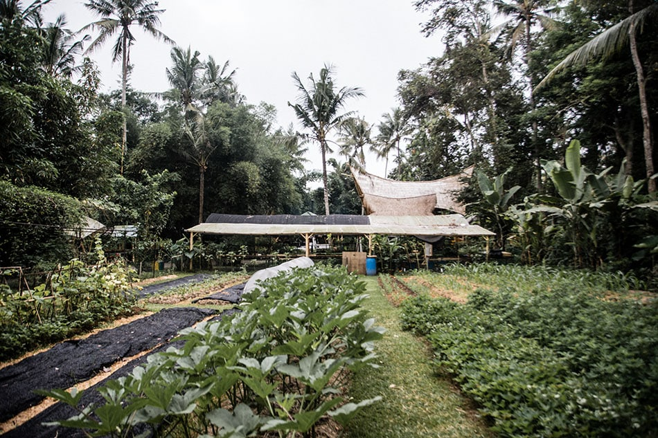 Permaculture design course with nick ritar in bali the kul kul farm join us in bali this june july with nick ritar of milkwood to learn how to provide for yourselves your family and community using permaculture solutioingenieria Image collections