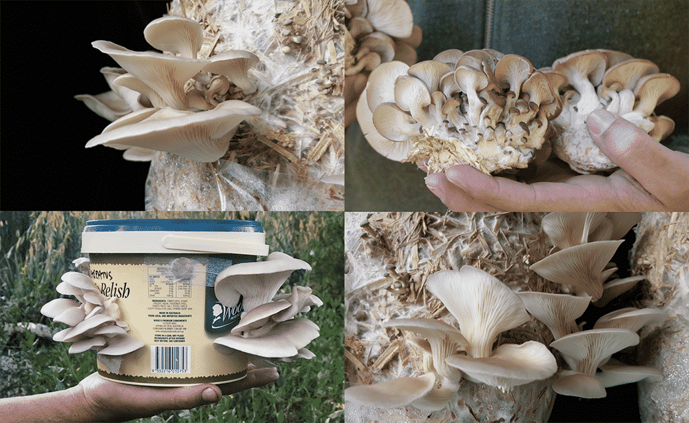 Mushroom Cultivation in Bali Workshop - The Kul Kul Farm
