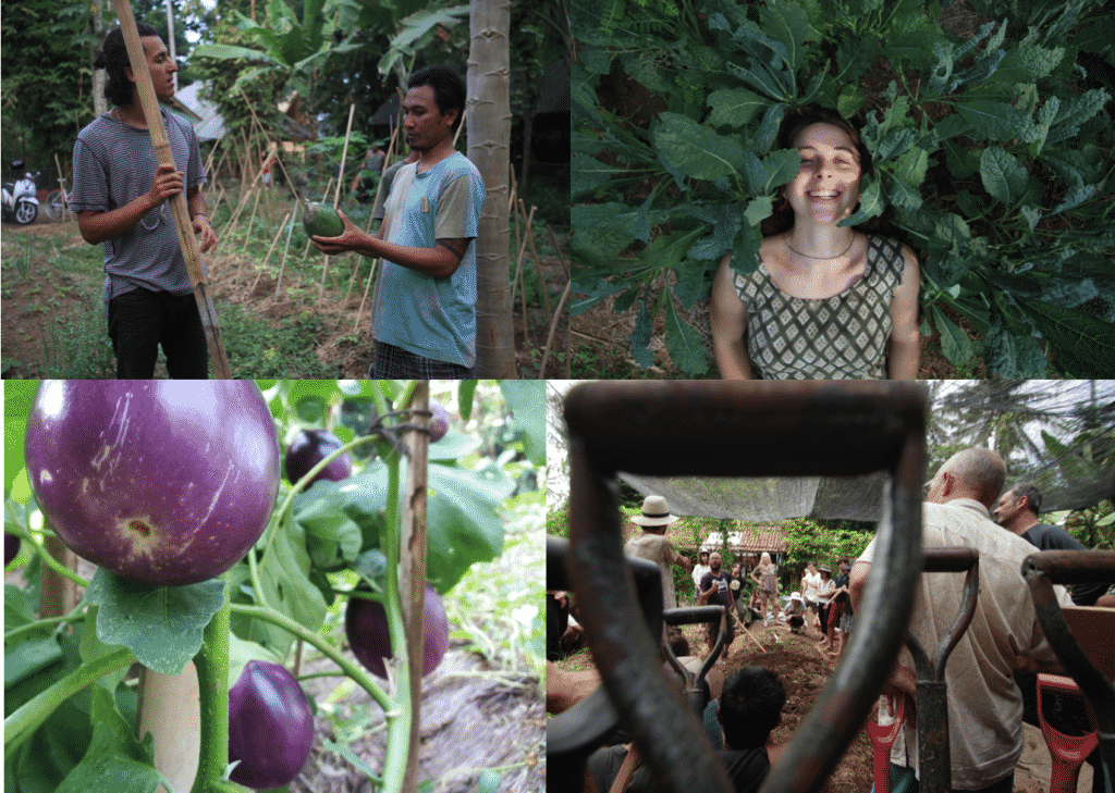 permaculture bali